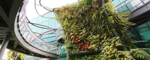 sculptural_tree_garden_900