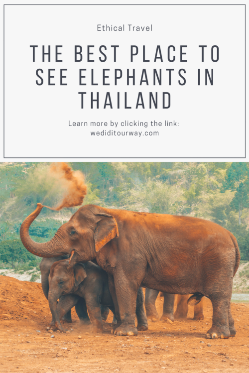 The best place to see and interact with elephants in Chiang Mai, Thailand. An ethical way to being with elephants. Learn more about these beautiful creatures. www.wediditourway.com