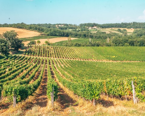 Vineyard in Gaillac France rolling hills