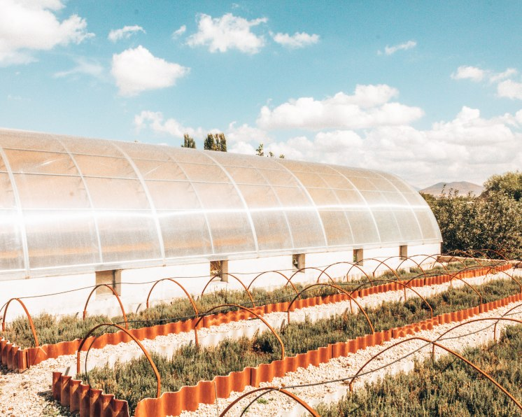 Nairian cosmetics greenhouse Armenia