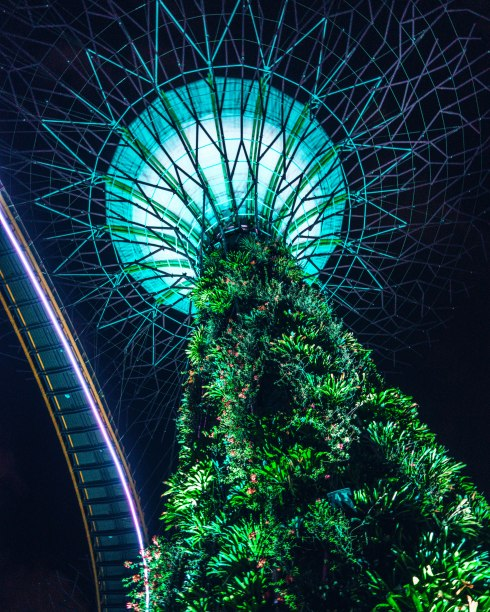 Supertree groove Singapore 2