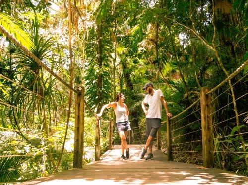 Wediditourway Cairns Australia.jpg