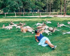 Wediditourway Carine chilling with kangaroos in Brisbane Australia
