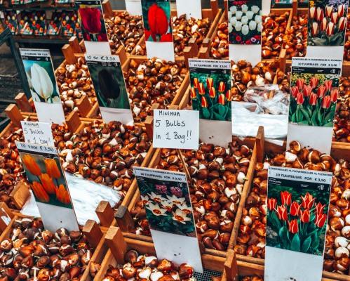 Tulips from the Bloemenmarkt in Amsterdam, Netherlands